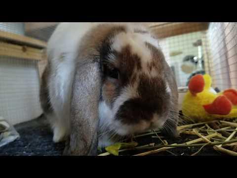 , title : 'Rabbit Tries Fresh Squash Flower