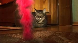 Огромный кот, покоривший тысячи сердец