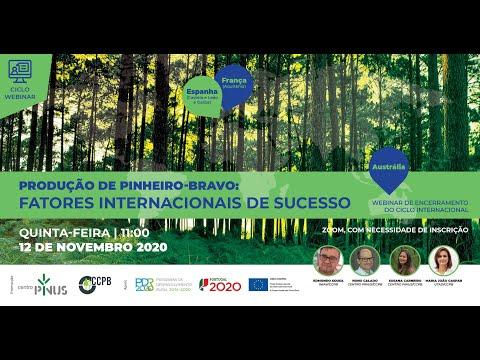 """Webinar Final do Ciclo """"Produção de pinheiro-bravo: fatores internacionais de sucesso"""""""
