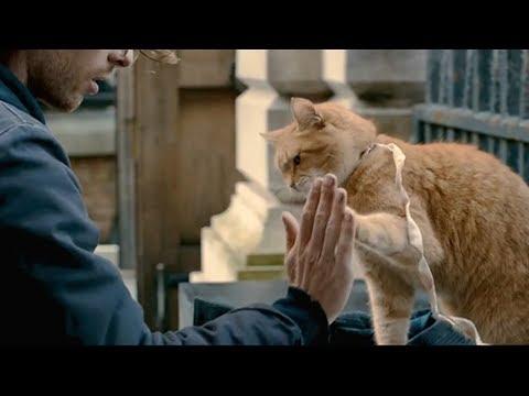【宇哥】乞丐小伙撿到一隻流浪貓並收養,為報恩它竟幫小伙日賺萬元《流浪貓鮑勃》