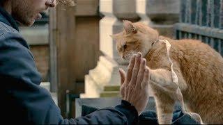 【宇哥】乞丐小伙捡到一只野猫带回收养,为报恩它竟帮小伙日赚万元《流浪猫鲍勃》