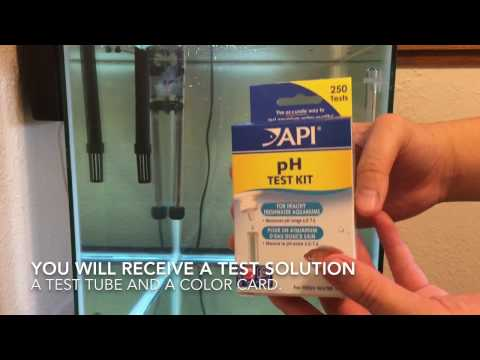 How To Check PH Level In Fish Tank
