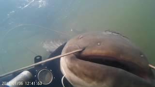Подводная охота на СОМА 2019 в корягах в чистой воде!Сомы от 15кг!!!