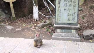 preview picture of video 'Encounter with monkey at entrance of Huangshizhai'