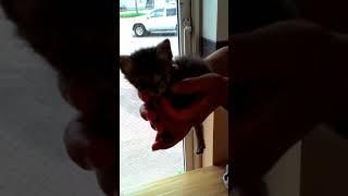 子猫保護①しょうだ動物病院で診察前V20180721104534
