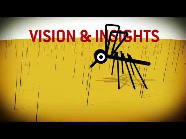 VIDEO: Mosquito