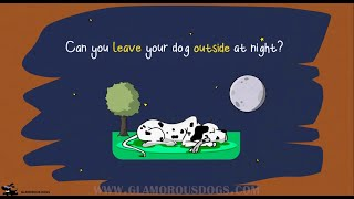 Is it really THAT bad to leave your dog outside at night?