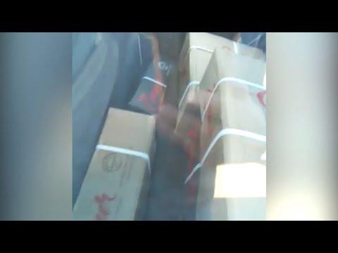 Táxis de Canoas são flagrados em Araricá transportando carga de carnes