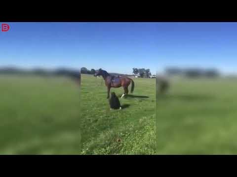 Про коня и наездницу