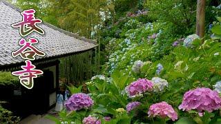 KAMAKURA. Hasedera Temple 2020.  #4K #長谷寺