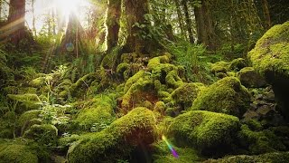 Nature Therapy: Relaxing Full Motion Forestry with Natural Sounds