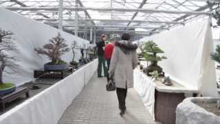 preview picture of video 'Hai Yama Ten 2012 - Bonsai-Ausstellung Bonsai-Zentrum Münsterland'