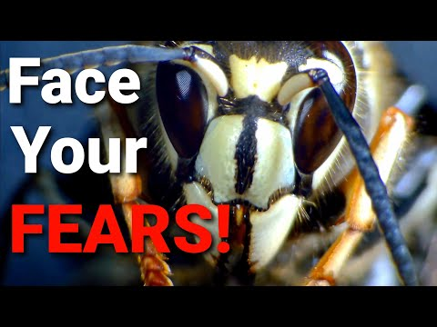 Wasps: The Literal WORST or The Absolute BEST? Top 5 things you NEED to know about WASPS!