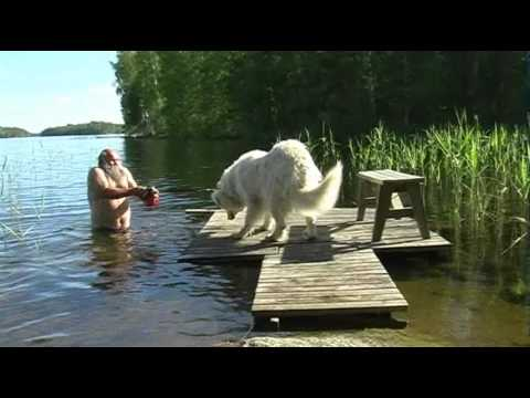 Finnish Santa attempts to get his dog to swim with him