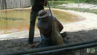 Trainer Helpless in an Alligator's Jaws | World's Scariest Animal Attacks