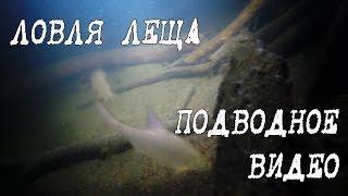 Зимняя ловля леща, подводное видео
