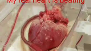 Real heart is beating Video