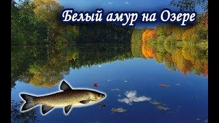 Что клюет на озере в рр3