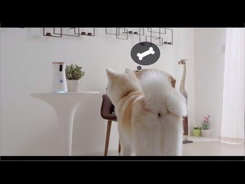 Furbo Dog Camera  | Treat-tossing Pet Camera