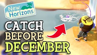 Animal Crossing New Horizons: CATCH FISH & BUGS BEFORE DECEMBER (November Critters You NEED To Find)