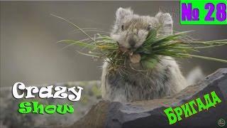 This is Crazy Бригада # 28 Лучшая подборка приколов апрель 2016 Смешное Видео