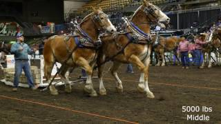2016 Farm Fair International Horse Pulls
