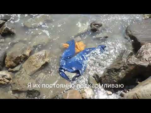 Крым. Стиральная машинка полуавтомат))
