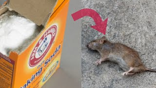 Get Rid Of Rats With Baking Soda | Fast Acting Home Remedy | Think Natural