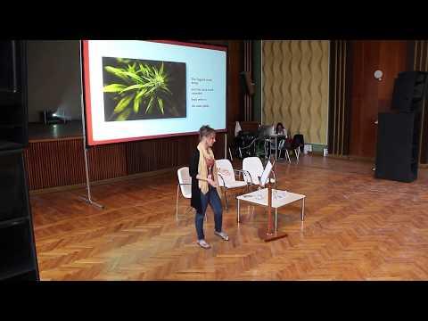 Die Thrombophlebitis von den Samen lna