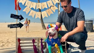 Dog Kissing Booth for Homeless Pit Bull Puppy