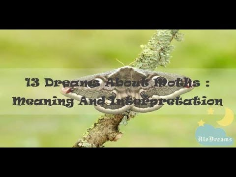 #88 Dreams About Moths - Meaning & Interpretation