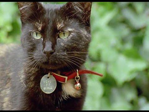 Кошки: Фильм BBC