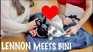 BINI THE BUNNY TEACHES LENNON TRICKS!