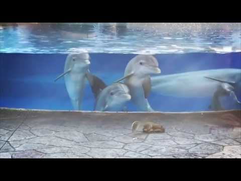 Dolphins Captivated by Wild Squirrels