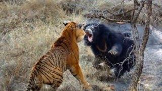 ТОП5 Самых необычных способов защиты животных