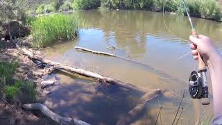 Fly Fishing for Carp 1   How To Feed a Carp