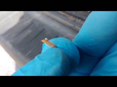 Serum od plam starczych biosea