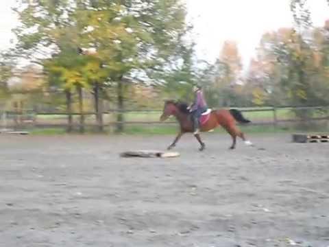 Comprare lattivatore di cavallo listruzione