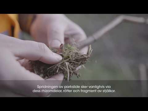 Med Plantex® Platinium kan du få bukt på aggresiva, envisa och invasiva ogräs