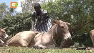 Wakazi waanza kuwafuga punda badala ya ng'ombe, Kisumu