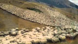 Ioana Radu & Mia Braia.  Ciobanas cu trei sute de oi. High Quality Mp3