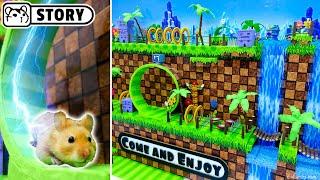 SONIC The Hedgehog Maze For Syrian Hamsters Ep.1🐹 Hamster Sega Game 🐹 Come And Enjoy - Homura Ham