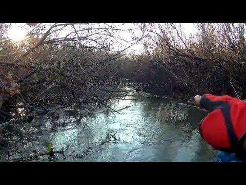 Амазонка в Ноябре. Приключение по реке, как ручей