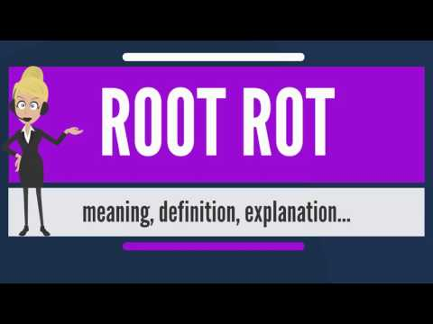 Video What is ROOT ROT? What does ROOT ROT mean? ROOT ROT meaning, definition & explanation