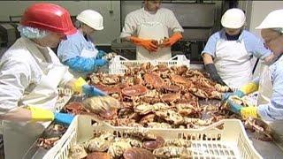 Crab Processing   04