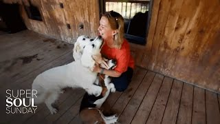 This Woman Is Changing the World, One Animal at a Time   SuperSoul Sunday   Oprah Winfrey Network
