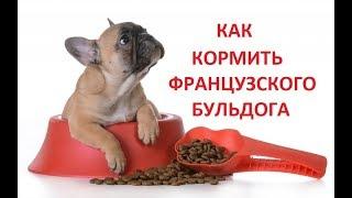 Французский бульдог Буся.  Фильм 9.  Как кормить собаку.
