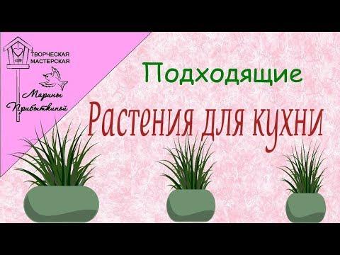 Какие растения подходят для выращивания на кухни 🌿