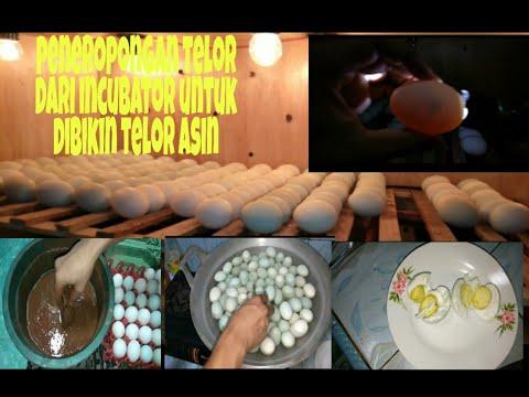 Ouă de parazit uman