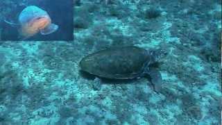 Le tartarughe di mare spiegate ai bambini